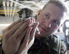 Photo: kitten rescued from Hurricane Katrina