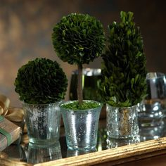 Boxwood Topiary in Antique Silver Pot