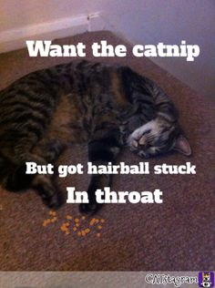 Hair balls   The enemy of cats  Plus dawgs XD
