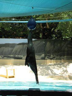 Sea Lion show at Houston Zoo