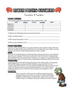 Everyone Loves Zombies right?This lab walks students through the process of transcribing and translating 8 unknown genese to discover the traits of their zombie. Students use an amino acid chart and create an additional trait. This lab has pre-lab and post lab questions.