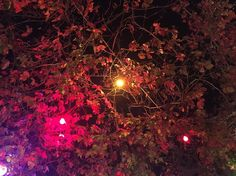 Hanging #vines filled with #fuchsia #lights !
