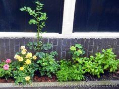 Von Tag zu Tag - Maries Blog: Gärtnern ohne Garten - Holland