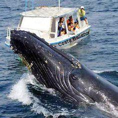 Make a whale tour at Costa Ballena in Costa Rica