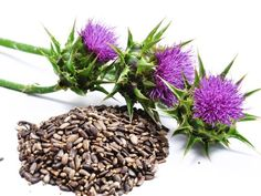 Milk thistle is a good herb to take when you want to do a liver detox.