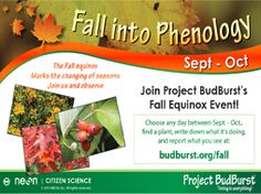 Citizen Science and autumn leaf color: Celebrate the beauty of autumn by observing plants in your community with our Fall into Phenology campaign. During September and October tak...