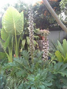 Acantus en flor ♡