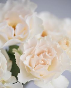 Just how heavenly are these Margaret Merril roses from @zestflowerslondon at @marketflowers? So incredibly scented with delicate ivory blush petals and golden stamens. Perfect for wedding flower designs...   #UnderTheFloralSpell #WeddingFlowers