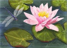 lily pads ♥