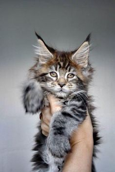 .what a beautiful kitty