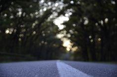 거리, 아스팔트, 선, 레인, 도로, 자료, 나무, 숲, 매크로