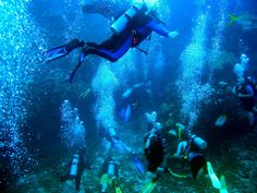 Eds Diving | Master Scuba Diver and Instructor: Come dive with us! Beginners welcome! Al | , ,
