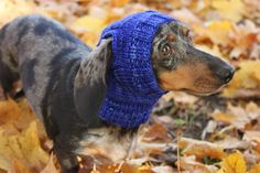 """See our web site for even more details on """"Dachshund Puppies"""". It is a great area to get more information. Long Haired Dachshund, Mini Dachshund, Dachshund Puppies, Dog Pattern, Dog Care, Cute Designs, Small Dogs, Best Dogs, Knitted Hats"""