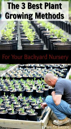 These are my 3 favorite plant growing methods I use in my backyard nursery My nursery is full of beautiful shrubs and perennials that people go crazy for backyardnursery plants gardening landscaping shrubs perennials # Landscaping Shrubs, Hydrangea Landscaping, Farmhouse Landscaping, Landscaping Design, Wholesale Plant Nursery, Wholesale Plants, Backyard Plants, Backyard Farming, Starting Seeds Indoors
