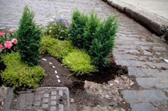 Pothole Gardening    Steve Wheen, a guerrilla gardener, uses plants and miniatures to create sanctuaries of tranquility in broken urban places. Specifically, he alters potholes in east London.