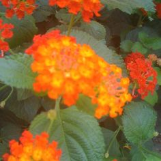 Flower in espana