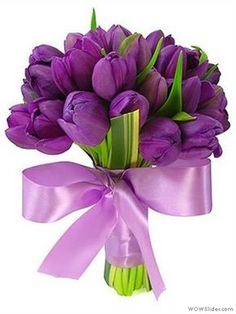 Beautiful Flowers Wallpapers, Most Beautiful Flowers, Pretty Flowers, Good Morning Flowers, Good Morning Wishes, Morning Blessings, Purple Wedding Bouquets, Wedding Flowers, Tulips Flowers