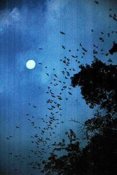 Bats in the moonlight ... just dial 911 cause i'd need an ambulance if i saw this.