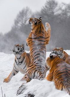 What fun in the snow... and like OMG! get some yourself some pawtastic adorable cat apparel!
