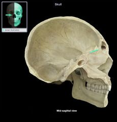Slides quizing you on all the bones and bone features of the axial skeleton you are required to know using pictures from Anatomy & Physiology Revealed Axial Skeleton, Bones And Muscles, Anatomy And Physiology, Head And Neck, Pituitary Gland, Nursing, Breast Feeding, Nurses