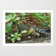 Kitty Camouflage - $18