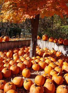 Autumn Scenes, Fall Pictures, Fall Images, Autumn Photos, Pretty Pictures, Autumn Harvest, Harvest Time, Autumn Leaves, Samhain Halloween