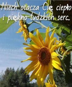 Nick Vujicic, Good Morning, Abs, Relationship, Humor, Quotes, Plants, Good Day, Night