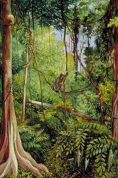 Forest Scene, Matang, Sarawak, Borneo    Marianne North