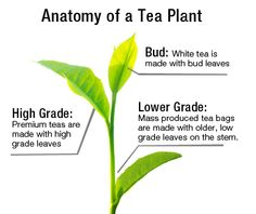 The 8 best Plant anatomy images on Pinterest | School, Plant science ...