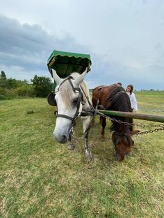 Horses, Animals, Tourism, Bicycling, Animales, Animaux, Animal, Animais, Horse