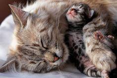 mama-cat-kitten