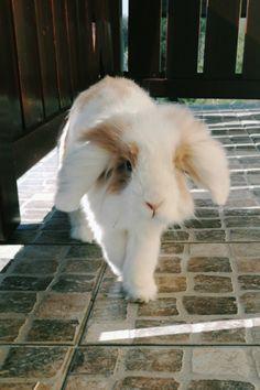 Happy bunny http://ift.tt/2oYXGes