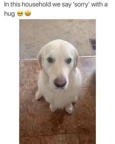 Funny Animal Jokes, Funny Dog Memes, Funny Dog Videos, Funny Animal Sayings, Funny Animal Humor, Cute Funny Baby Videos, Cats Humor, Cute Funny Dogs, Cute Funny Animals
