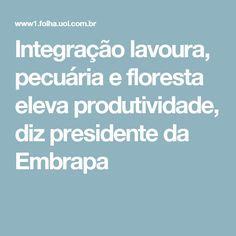 Integração lavoura, pecuária e floresta eleva produtividade, diz presidente da Embrapa