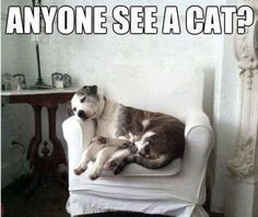 Anyone see a cat? | Man's (and woman's) best friend.