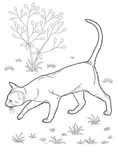 cat_31 cats coloring pages for teens and adults