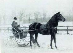 Black Hawk, uno de los sementales sobre los que se fundó la raza American Morgan Horse
