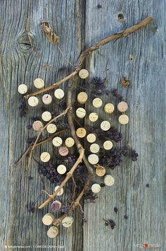 Wine corks and dried grapes on vine on wooden surface | © living4media | Achim Sass | 11366328