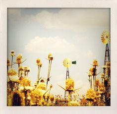 Windmills & Weeds