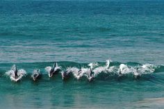 Dolphins near East London, South Africa