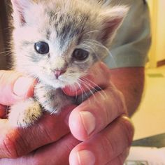 Adorable    Kittens Compilation - Super Tiny and Cute Kittens ... - YouTube