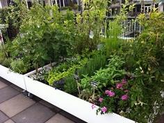 Small Dutch Urban Farm | permaculture | kitchen garden | jardin potager