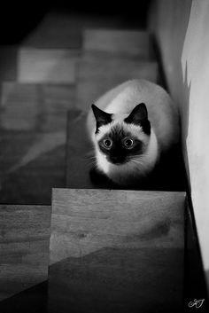 Deux by Lazy Dream #cat #kitten