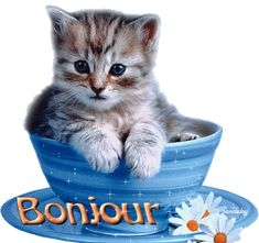 Gifs Bonjour Page 29 Happy Weekend Images, Les Gifs, Happy Friendship Day, Good Morning Good Night, Gif Animé, Cute Cats And Kittens, Emoji, Pictures, Smileys