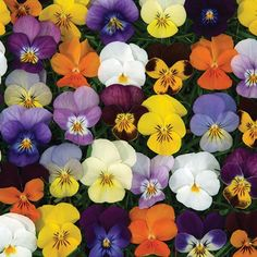 jersey flowers direct