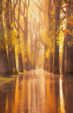 Waltzing Woods - Cologne, Germany  (by NoahSud on Flickr) #iLuv #iLuvTravel