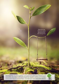 Trees For Cities: Swing Plant the tree that your great grandchildren will swing from.