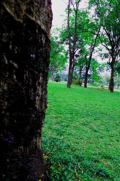 Taman UI ( UI Park ) - Depok Id - Indonesia