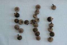Real Mini Small Acorns for Fall Décor Crafts Sets of 50 for $7.00 up to 500