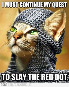 The Quest Continues : the red dot must be stop for the well being of our fellow cats.